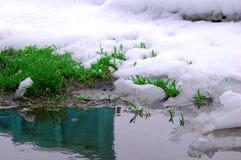 Vår reflekterad i vatten Arkivbild