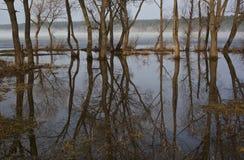 Vår reflexion av träd Royaltyfria Bilder
