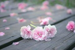 Vår rosa körsbärsröda blomningar som faller på en träbana arkivfoton