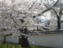 Vår Sakura i Kyoto, Japan arkivbilder