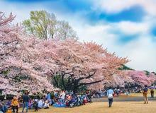 Vår sakura som blommar på Shinjuku Gyoen, parkerar, Tokyo, Japan Arkivfoto