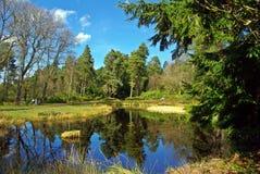 Vår sjö med trädreflexion Royaltyfri Fotografi