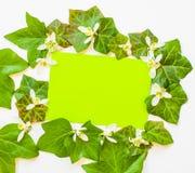Vår som är flatlay av murgrönasidor med vita blommor och gräsplanPA royaltyfria foton