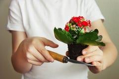 Vår som arbeta i trädgården begrepp Vår som planterar aktivitet royaltyfri foto