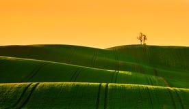 Vår som böljer fältet under soluppgång Royaltyfri Fotografi