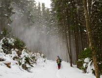 Vår som trekking i bergen Royaltyfria Bilder