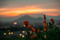 Vår-sommar apelsinsolnedgång royaltyfri fotografi
