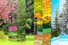 Vår sommar, nedgång, vintercollage Fotografering för Bildbyråer