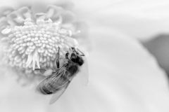 Vår Tid i vinter Fotografering för Bildbyråer