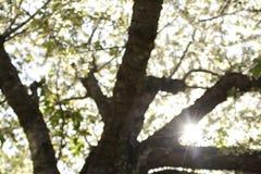Vår till och med träden Fotografering för Bildbyråer