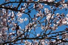 Vår - träd med blommor royaltyfria foton