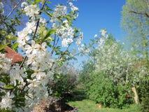 Vår trädgård i April 2014 arkivbilder