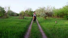 Vår utomhus, flickaryttare, jockeyridning på fullblods- härlig brun hingst, till och med det gamla blomstra äpplet arkivfilmer