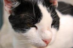 Våra husdjur Fotografering för Bildbyråer