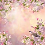 VårApple blomning Royaltyfri Fotografi
