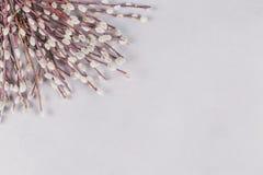 Vårbakgrund med gruppen av pussy-pil ris på den ljusa lantliga tabellen arkivfoto