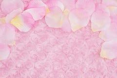 Vårbakgrund med kronblad för en blomma på blekt - rosa färger steg flott tyg fotografering för bildbyråer
