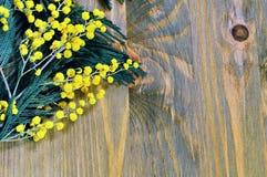 Vårbakgrund med mimosan förgrena sig på den mörka träyttersidan Fotografering för Bildbyråer