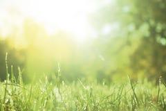 Vårbakgrund med nytt gräs på en solig dag arkivfoto
