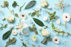 Vårbakgrund med vita blommor för älskvärd blomning över blått papper B?sta sikt, lekmanna- l?genhet sommar f?r sn?ckskal f?r sand arkivbilder