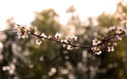 Vårbakgrunden Arkivbild