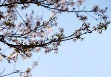 Vårbakgrunden Royaltyfria Foton