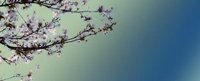 Vårbakgrunden Royaltyfri Bild