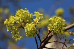Vårblom Royaltyfria Foton