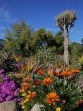 Vårblom i Kalifornien på Taft botaniska trädgårdar, Ojai C Royaltyfri Foto