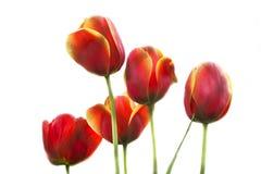 Vårblom på gräsmattan Arkivbild