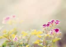 Vårblomma i trädgård med den grunda fokusen Fotografering för Bildbyråer