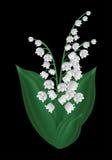 Vårblomma - liljekonvalj Royaltyfri Fotografi