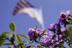 Vårblomma och amerikanska flaggan Royaltyfri Fotografi