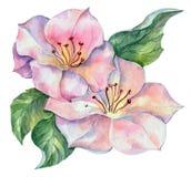 Vårblomma, vattenfärg Royaltyfri Bild