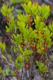 Vårblommabild Royaltyfri Foto