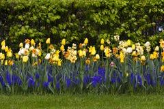 Vårblommagräsmatta Royaltyfria Foton