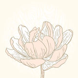 Vårblommakort Royaltyfri Bild