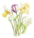 Vårblommapingstlilja och tulpan som isoleras på vit bakgrund Dragen illustration för vattenfärg hand vektor illustrationer