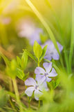 Vårblommor Fotografering för Bildbyråer