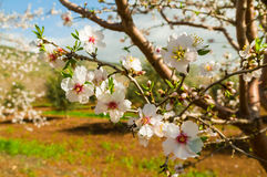 Vårblommor Royaltyfria Bilder