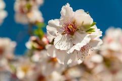 Vårblommor Royaltyfria Foton