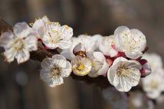 Vårblommor Royaltyfri Fotografi