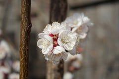 Vårblommor Royaltyfri Foto