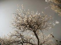 Vårblommor av äppleträdet på filialerna Sepiaeffekt royaltyfri foto