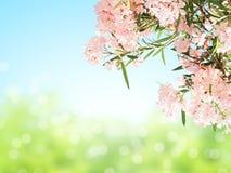 Vårblommor av rosa färger färgar och gör grön sidor royaltyfri fotografi