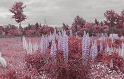 Vårblommor för röda färger drömmer att förbluffa arkivbild