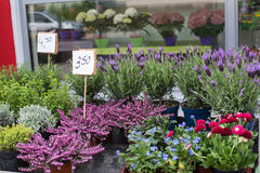 Vårblommor i blomsterhandlare shoppar Arkivfoto