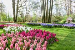 Vårblommor i den Keukenhof trädgården, Nederländerna royaltyfria bilder