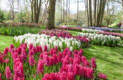 Vårblommor i holländareträdgården Keukenhof royaltyfria bilder
