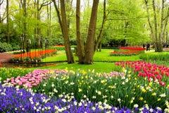 Vårblommor, Keukenhof trädgårdar arkivfoto
